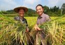 李昌平致信袁隆平 给农民留几粒真正的种子