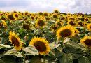 向阳盛开的花朵